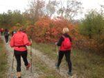 2020-10-28 Nordic Walking - Doberdò del Lago, Rifugio Cadorna, Gradina (S) (6)