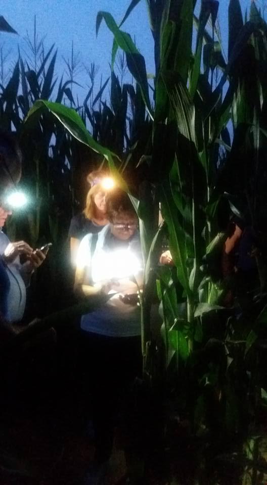 Labirinto nel Mais Bagnaria Arsa C 31lug2017 (1)