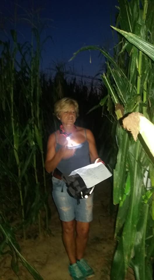 Labirinto nel mais - Fattoria Didattica La Selce - Bagnaria Arsa (UD) 19-07-2018(C3)