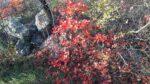 Nordic Walking - Medeazza – Comarie – Klarici (Sentiero Schmid) 14nov2019 (A) (5)
