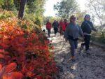 2015-11-25 Nordic Walking - Malchina - Slivia (28)