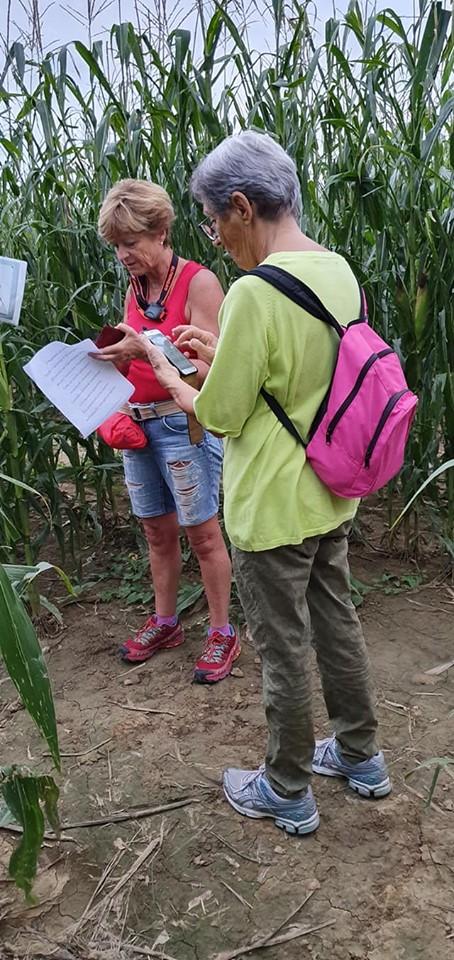 Labirinto nel mais - Fattoria Didattica La Selce - Bagnaria Arsa (UD) 08ago2019 (F4)