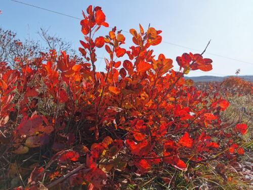 2020-10-25 Prepotto-Praprot una giornata splendida per aprire le porte all'autunno...assieme agli amici dei Sentieri del Cuore (2)